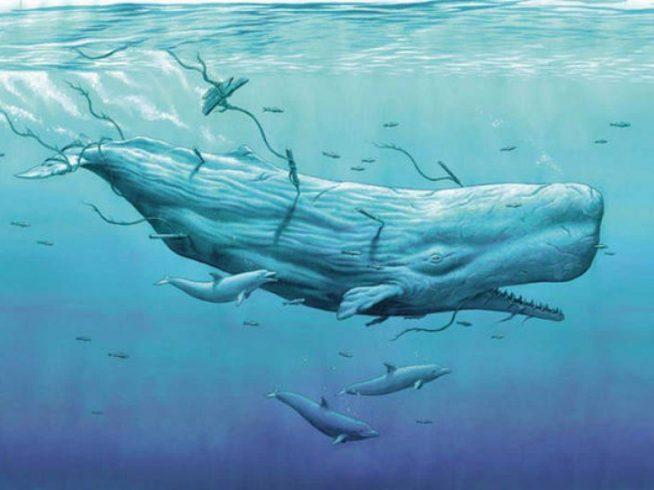 Moby Dick - Resumo e Contexto